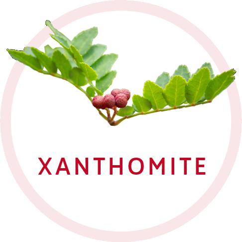 Xanthomite